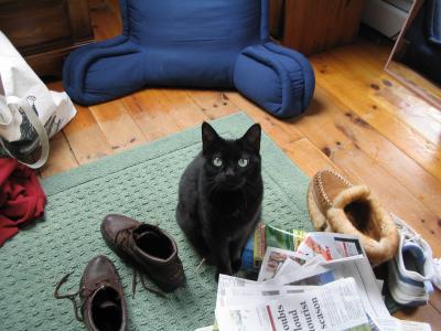 wendy cat1.jpg