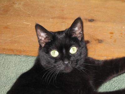 wendy cat2.jpg